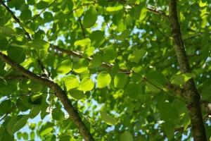 leaves-141582_640